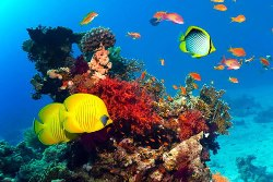 egipet-podvodny-mir-krasnogo-morya